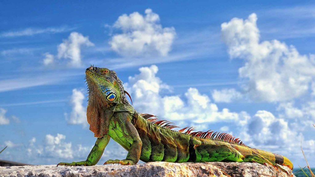 Tienda Online Solo Iguana